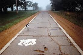 Route 66 Podcast Shellee Graham Dog on Road